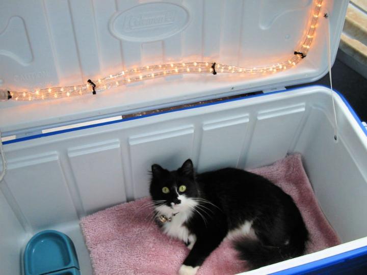 DIY Cat House Using Cooler