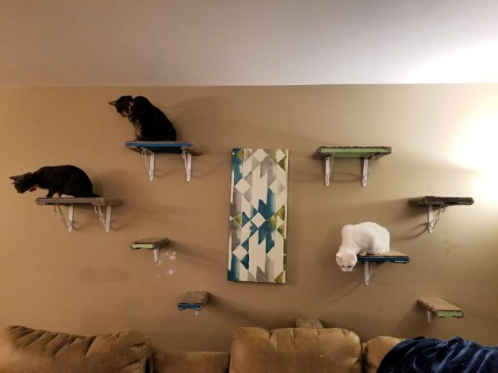 How To Build Cat Wall Shelves