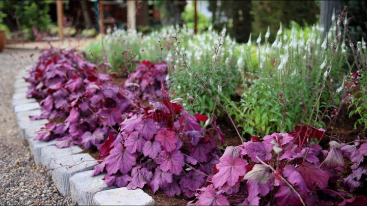 Planting a New Flowerbed
