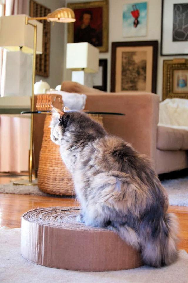 Small Cat Scratching Post