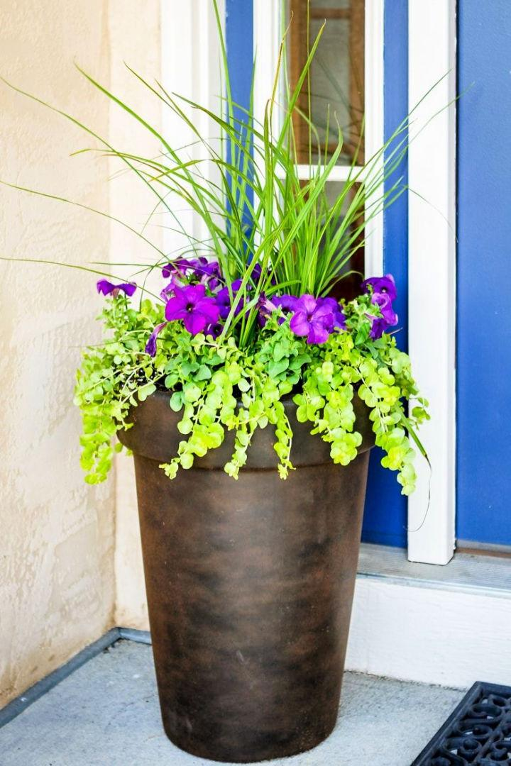 Flowers to Plant in Tall Pots