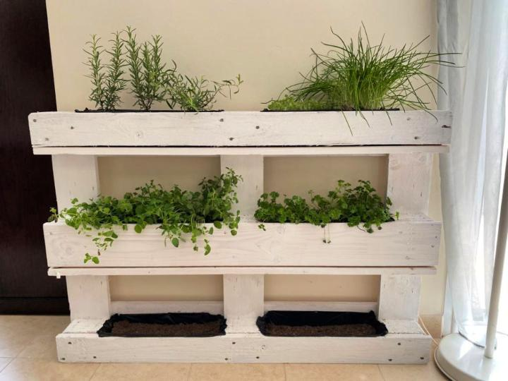 Herb Garden Using Wooden Pallet