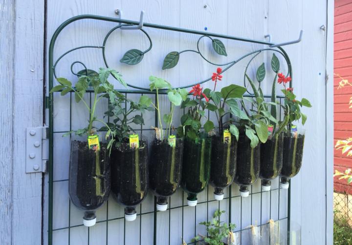 Turn Soda Bottles into Vertical Garden