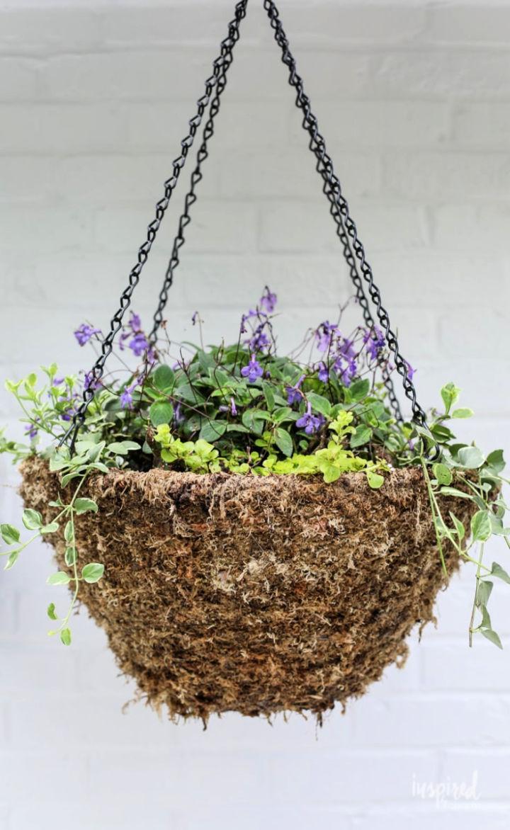 Hanging Basket Plant for Shade