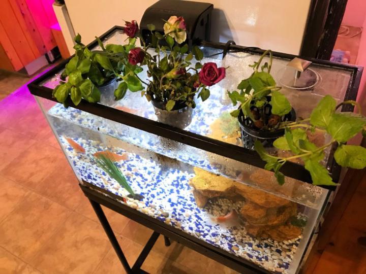 10 Gallon Aquaponic Garden