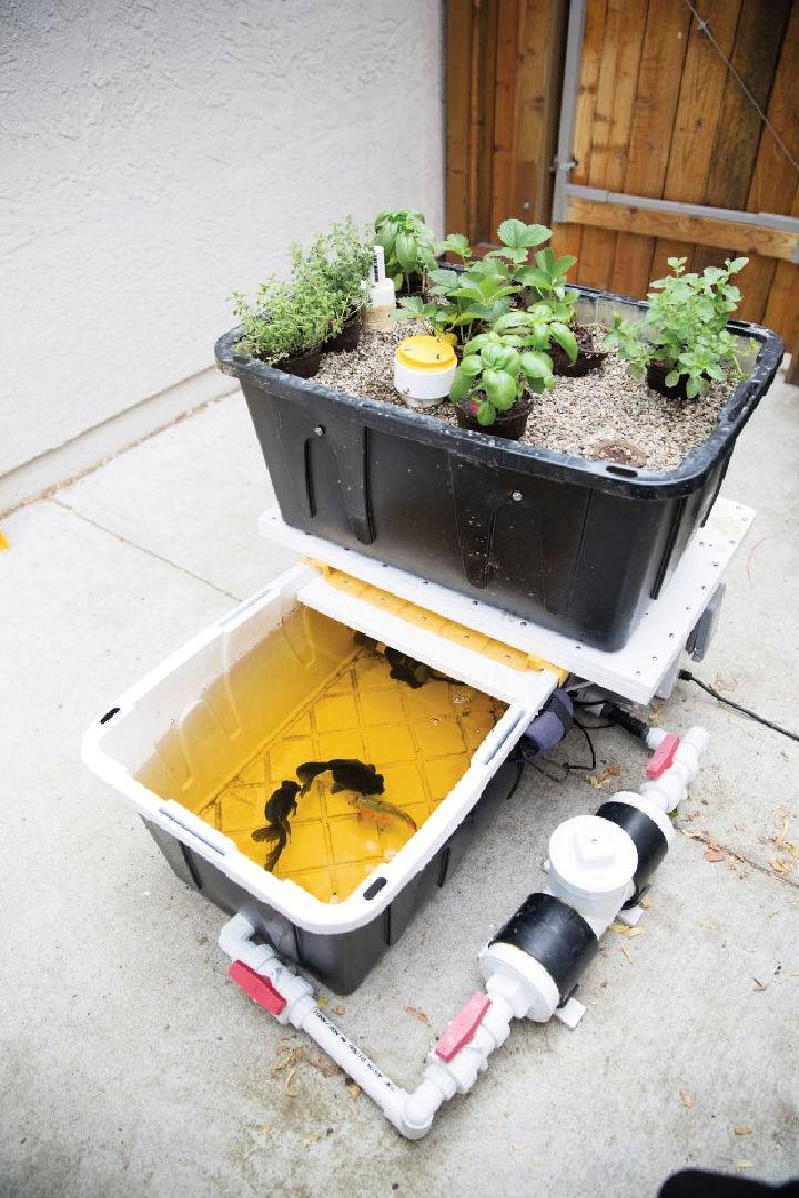 Aquaponic Garden with Arduino