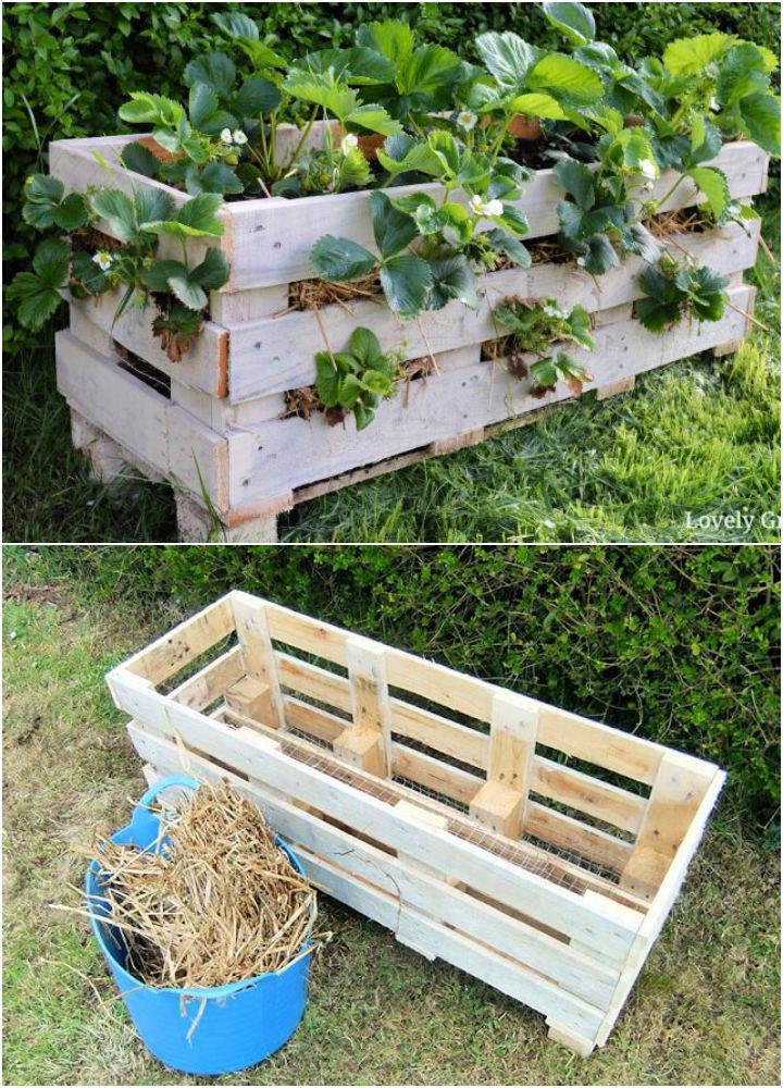 Better Strawberry Pallet Planter