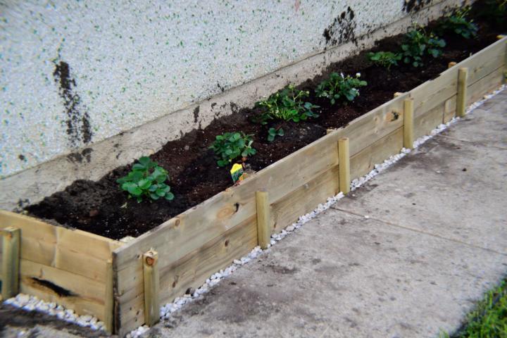DIY Canada Day Strawberry Planter