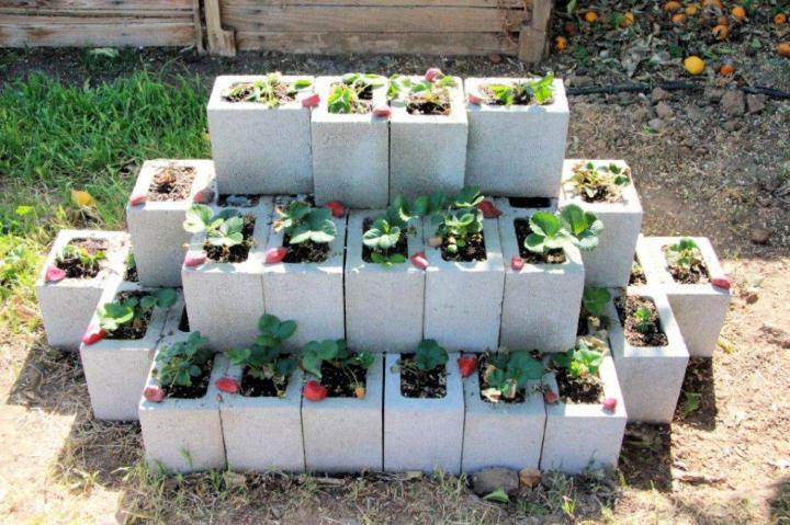 DIY Cinder Block Strawberry Planter
