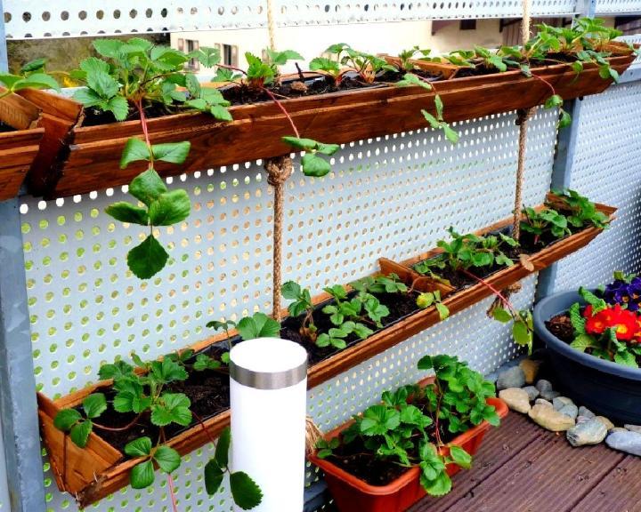 DIY Hanging Strawberry Planter