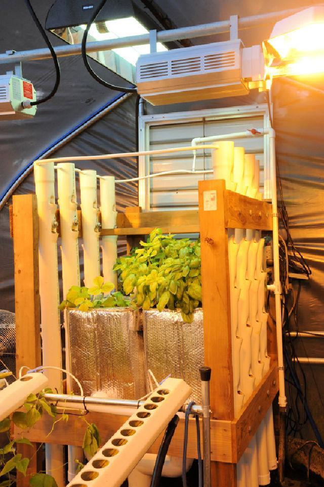 DIY Vertical Aquaponics System