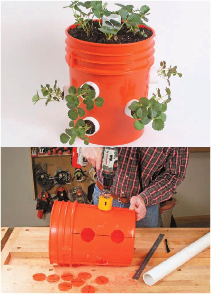 Grow Strawberries in a 5 gallon Bucket