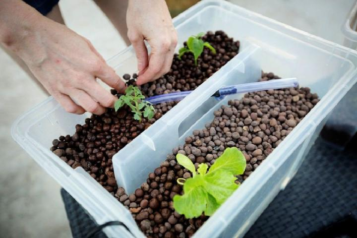 Make Your Own Aquaponic Garden