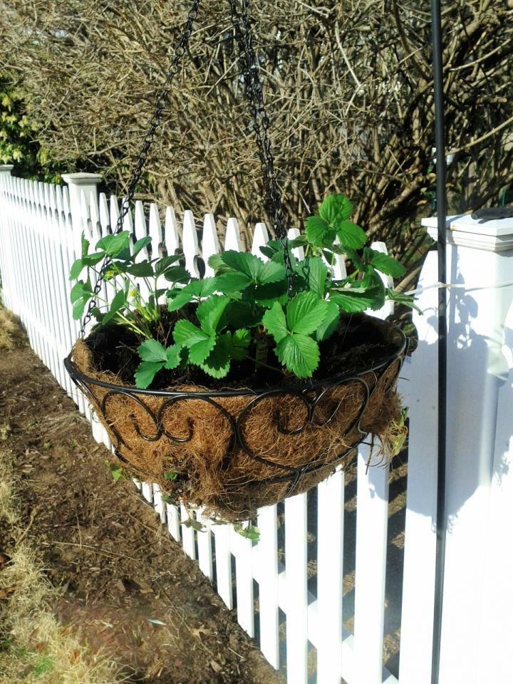 Make a Hanging Strawberry Planter