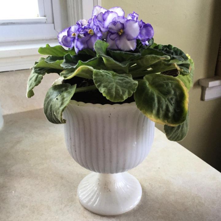 Self Watering African Violet Planters