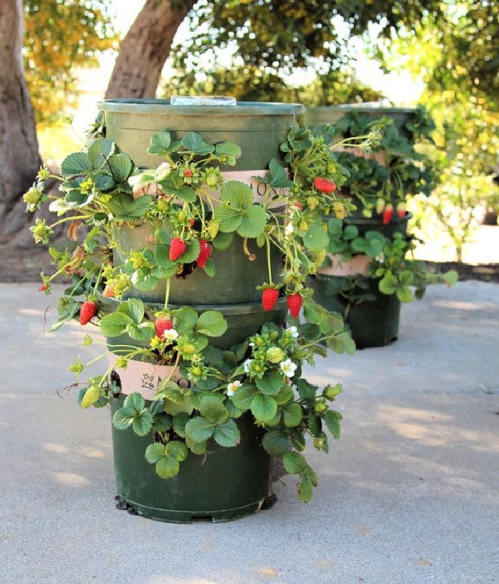 Space Saving Vertical Strawberry Planter