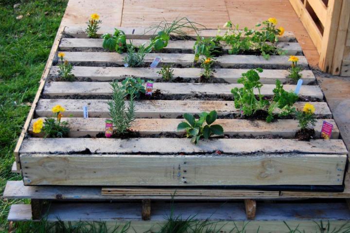 Herb Garden In A Salvage Wood Pallet