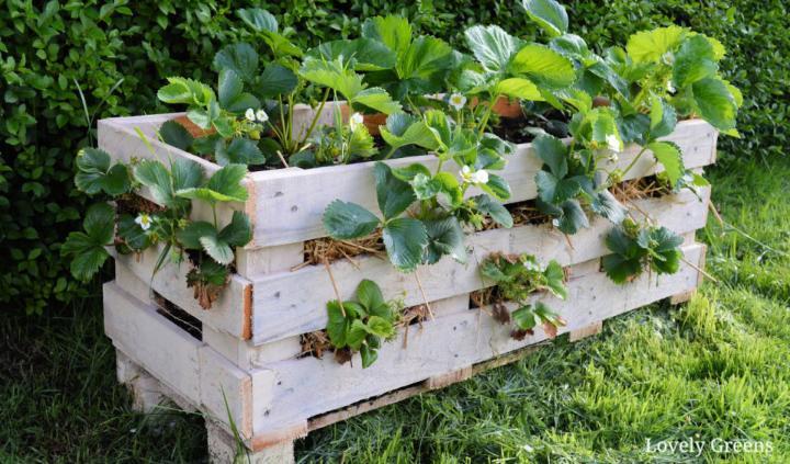 Make A Strawberry Pallet Planter