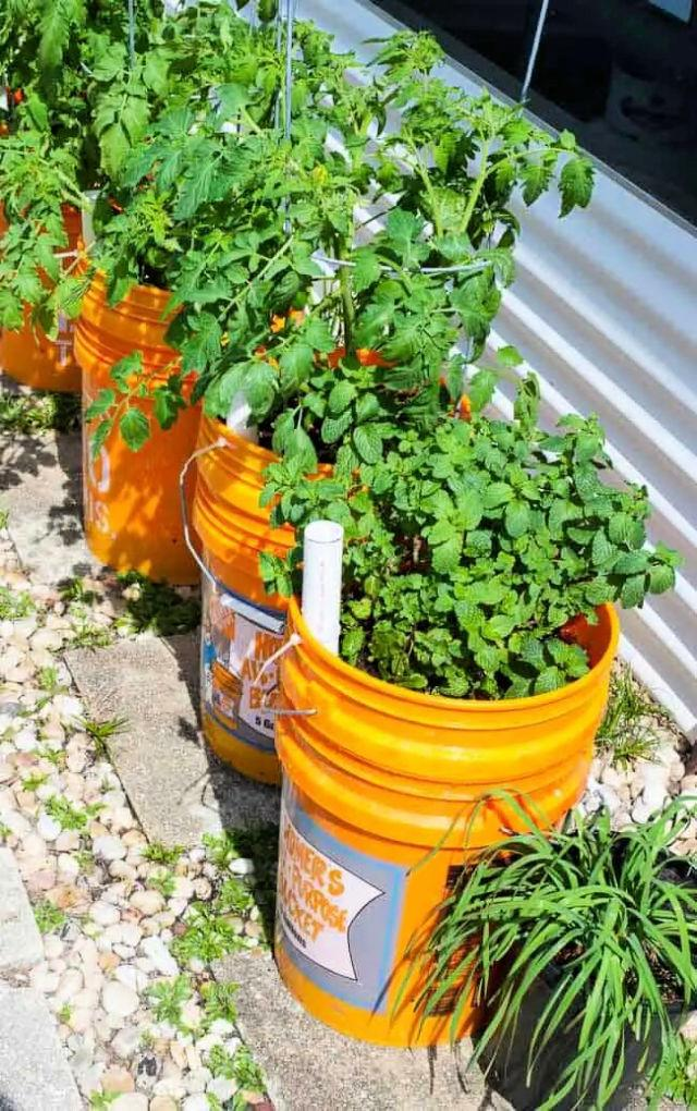 Self Watering Planters For Tomatoes